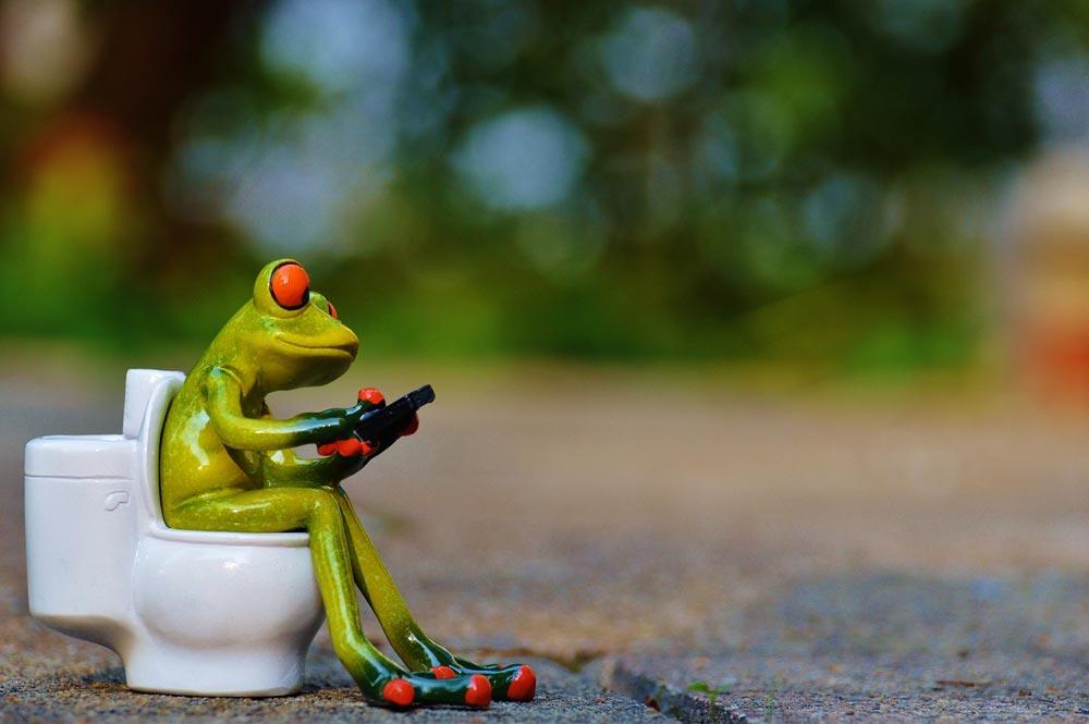 La rana ha scelto un wc portatile :D